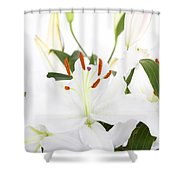 White Lilies And Background Shower Curtain