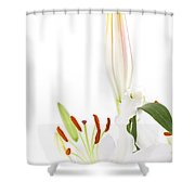 White Lillys And Background Shower Curtain