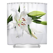 White Lily And Buds Shower Curtain