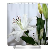 White Lily With Buds Shower Curtain