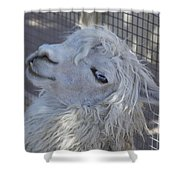 White Llama Shower Curtain