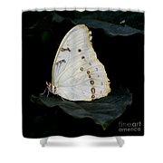 White Morpho Shower Curtain
