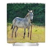 White Mule No.5007 Shower Curtain