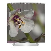 White Mullein - Verbascum Lychnitis Wildflower Shower Curtain