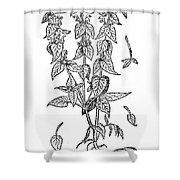 White Nettle Shower Curtain