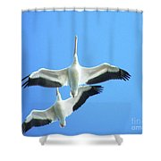 White Pelicans In Flight Shower Curtain