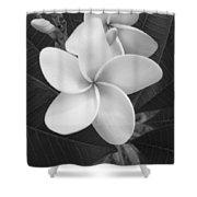 White Plumeria Bw Shower Curtain