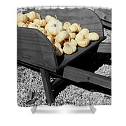 White Pumpkin Harvest Shower Curtain