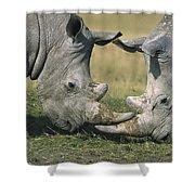 White Rhinoceros Ceratotherium Simum Shower Curtain
