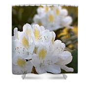 White Rhododendron Bloom Shower Curtain