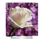 White Rose And Plum Blossoms Shower Curtain