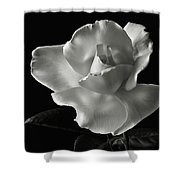 White Rose In Black And White Shower Curtain