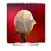White Rose Red And Black Bg Shower Curtain