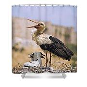 White Stork Ciconia Ciconia, Turkey Shower Curtain by Carson Ganci
