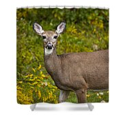 White Tail Early Autumn Shower Curtain