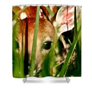 White Tailed Deer Fawn Hiding In Grass Shower Curtain