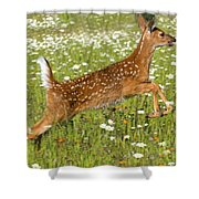 White Tailed Deer Fawn In Field Of Shower Curtain