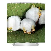 White Tent-making Bats Shower Curtain