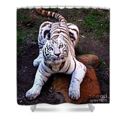White Tiger 2 Shower Curtain
