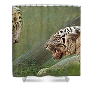White Tiger Growling At Her Mate Shower Curtain