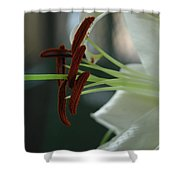 White Tiger Lily II Shower Curtain
