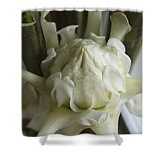 White Torch Ginger Shower Curtain