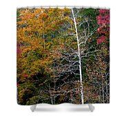 White Tree Fall Colors  Shower Curtain