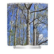 White Trees Against A Blue Sky Shower Curtain