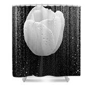 White Tulip On Black Shower Curtain