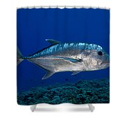 White Ulua Shower Curtain