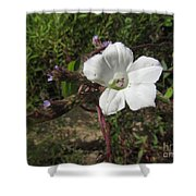 Small White Morning Glory Shower Curtain