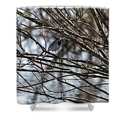 White Wagtail Shower Curtain