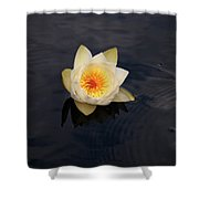 White Water-lily 2 Shower Curtain