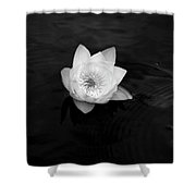 White Water-lily 3 Shower Curtain
