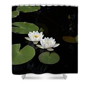 White Water-lily 4 Shower Curtain