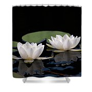 White Water-lily 8 Shower Curtain