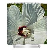 White Wildflower I Shower Curtain