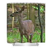 Whitetail 7338 Shower Curtain