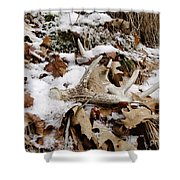 Whitetail Deer Antler  - Half Of 10 Shower Curtain