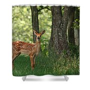 Whitetail Deer Fawn Shower Curtain