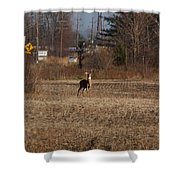 Whitetail Deer Shower Curtain