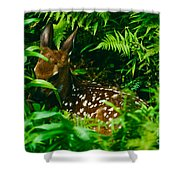 Whitetail Fawn And Ferns Shower Curtain
