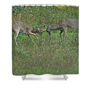 Whitetail Fighting_9668 Shower Curtain