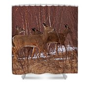 Whitetails On The Move Shower Curtain