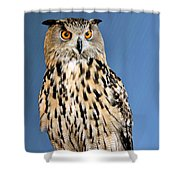 Who Shower Curtain