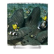 Whole Family Of Clownfish In Dark Grey Shower Curtain by Mathieu Meur