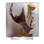 Whooping Crane Preening Shower Curtain