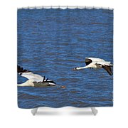 Whooping Cranes Shower Curtain