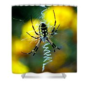 Wicked Spider Paint Shower Curtain