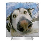 Wide Angle Dog Shower Curtain